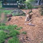 Lehrausflug Tiergarten Schoenbrunn 1A (1)